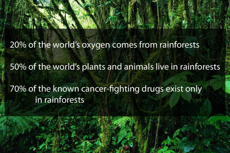 rainforests are essential to life