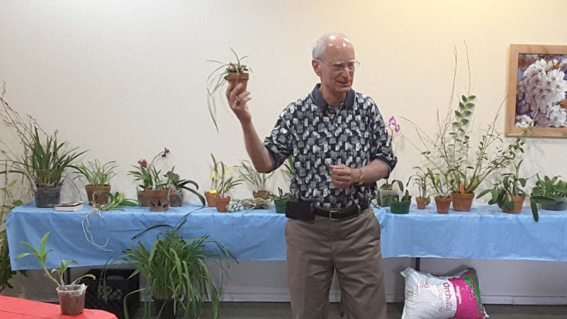 2016 July GNTOS Orchid Auction