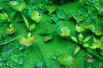 green-plant-nature
