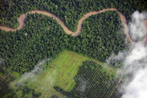 loss of rainforest to palm oil farming